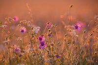 Meadow in late sunlight