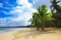 Palm trees on white tropical beach.