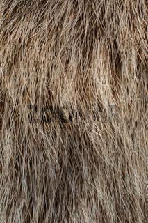 Decorative animal  fur as a background