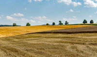summer partially harvested wheat field