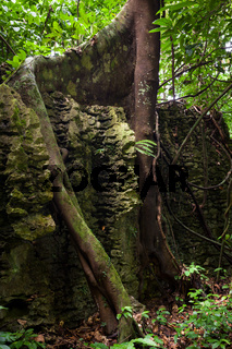 Tree roots on stone wall