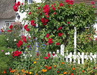 Landhaus mit Rosen im Garten