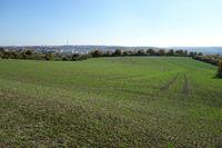 Triticum aestivum, Winterweizen, winter wheat, im Herbst, in autumn