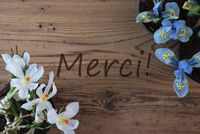 Crocus And Hyacinth, Merci Means Thank You