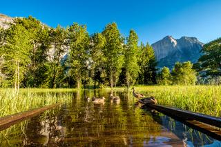 Meadow with flooded boardwalk in Yosemite