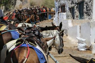 Santorini Donkey Greece