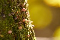 Tree Trunk with Mushrooms