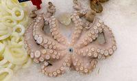 octopus on ice display