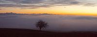 Baum mit Ausblick über das Nebelmeer am Bodensee