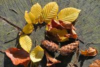 bunter Blätter im Herbst auf einem alten Baumstamm