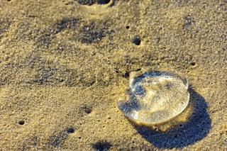 Jellyfish over beach sand