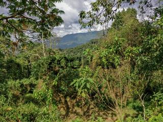 Regenwald, Ruanda, Afrika