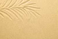 Palm Leaf Drawn in the Sand. Summer Background