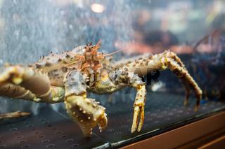 Live crab on sale