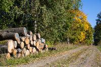 Waldweg mit Holzpolter im Herbst
