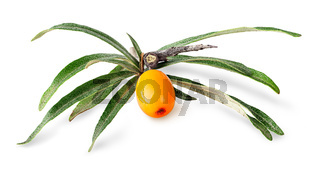 Seabuckthorn berry with leaves