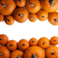 Many orange pumpkins