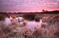 red frosty sunrise over swamp