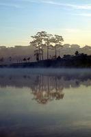 Da Lat morning with lake in fog