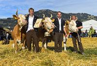 Simmentaler Siegerkühe, SWISSCOW Topschau Saanenland, Gstaad, Schweiz