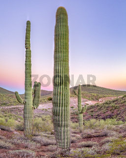 Triple cactus squad in Arizona