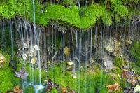 Wasser rinnt ueber Moospolster auf der Schwaebischen Alb
