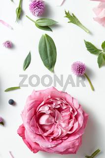 Vintage background of pink roses