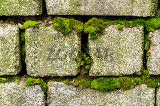 An old brick wall overgrown with green moss
