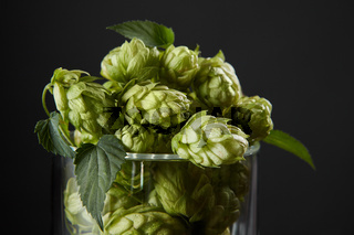 hops in a beer glass