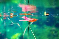Cennote underwater