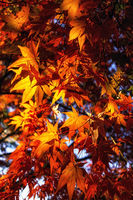 autumn fall foliage color