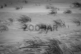 Sturm am Strand mit Dünengras
