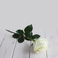 White rose on wood background