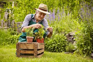 Gardener assessment seedlings garden