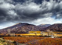 Vineyards. The Autumn Valley. HDR