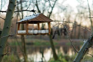bird feeder, feeding birds in winter