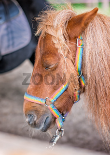 Close up of a head of a cute little pony
