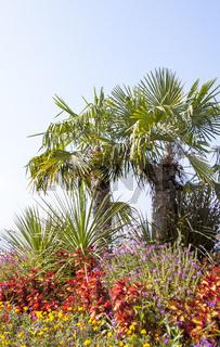 Palmen und Blumen an der Uferpromenade in Überlingen am Bodensee