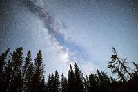 Pine trees silhouette Milky Way night sky
