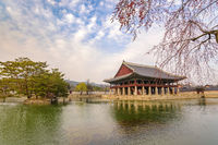 Spring cherry blossom or sakura flower at Gyeongbokgung Palace, Seoul, South Korea