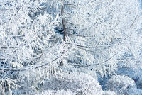 Frozen tree background