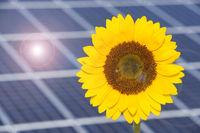 Sonnenblume mit Solarzellen als Symbol für Energiewende