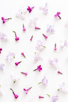 The white background filled with purple spring lilac flowers. Concept of freshness and beautifulness. Flat lay. Top view.