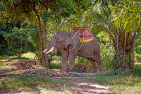 Big elephant rests between tourists ridings