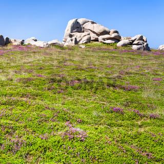 boulder at green heathland in Ploumanach site