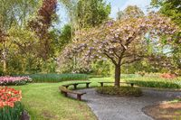Beauty tree in bloom with bench