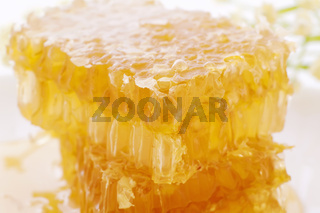 Piece of a honeycomp with dripping honey as closeup