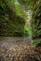 Fern Canyon in Humboldt County, California