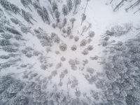 Snowy Winter Scene