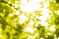 Summer nature and sun rays background